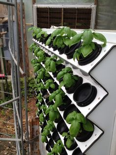 Hydroponics Gardening Basil just starting in our Vertical Aeroponic System Aquaponics System, Aeroponic System, Hydroponic Farming, Hydroponic Growing, Aquaponics Diy, Aquaponics Greenhouse, Gardening For Beginners, Gardening Tips, Flower Gardening
