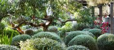 Peter Shaw · Sunnymeade - The Design Files Australian Garden Design, Australian Native Garden, Dry Garden, Garden Gates, Green Garden, Sunken Garden, Coastal Gardens, Garden Landscape Design, The Design Files