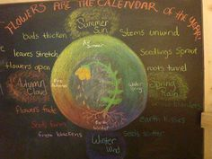 Waldorf ~ 5th grade ~ Botany ~ chalkboard drawing
