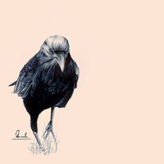 Drawing with just your average ballpoint pen. Wish I could commit to a drawing like that. Drawing by Kleinmeli on deviantArt. Biro Art, Ballpoint Pen Art, Beautiful Drawings, Beautiful Artwork, Harley Davidson, Raven Art, Crows Ravens, Portrait Illustration, Kraken