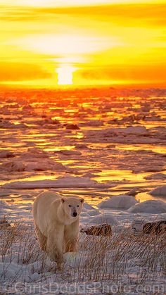 Sunrise along the shores of Hudson Bay 50km north of Churchill, Northern Manitoba, Canada  (by Chris Dodds)