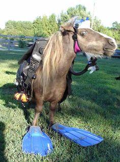 http://www.burleson-arabians.com/images/scuba_diving_horse.jpg