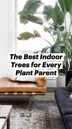 Best Indoor Trees, Dream Decor, Plant Care, Houseplants, Indoor Plants, Gardening Tips, Greenery, Outdoor Living, Decoration