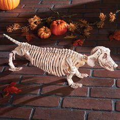 Skeleton Dachshund Dog Pet Zombie Skull Halloween Prop Haunted Walking Dead Bone