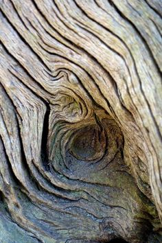 Dead wood photo by T. Theme Nature, Deco Nature, Tiles Texture, Texture Art, Patterns In Nature, Textures Patterns, Art Patterns, Wooden Textures, Tree Bark