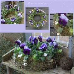 Maartse viooltjes