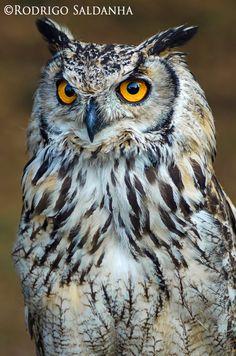 The video consists of 23 Christmas craft ideas. Owl Bird, Bird Art, Pet Birds, Owl Photos, Owl Pictures, Exotic Birds, Colorful Birds, Beautiful Owl, Animals Beautiful