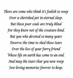 3rd anniversary of the loss of  our son Speedy the Cat..Still Miss him..Miss them all.