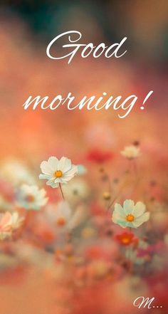 Good Morning Messages: If you like to share Good Morning with your family, relatives, lover & friends. Find out unique collections of Good Morning Msg, best good morning messages for friends in Hindi, morning love messages. Good Morning Beautiful Pictures, Good Morning Nature, Good Morning Images Flowers, Good Morning Images Hd, Cute Good Morning, Morning Pictures, Night Flowers, Good Morning Greeting Cards, Funny Good Morning Messages