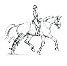 How to Optimize Your Dressage Horse's Soundness from the Saddle.