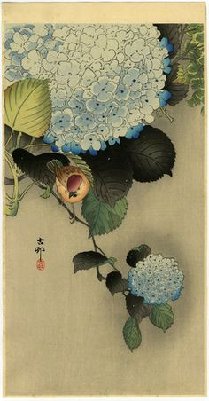 Koson Japanese Woodblock Print Sparrow on Hydrangea 1930s