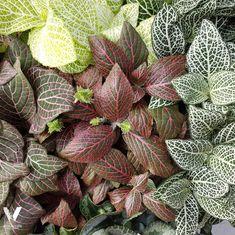 jakie wybrać rośliny do ogrodu w szkle aby ładnie wyglądało Succulents, Plants, Cactus, Succulent Plants, Plant, Planets