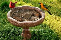 87 Best Nature Beautiful Bird Baths Images
