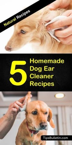 Homemade Dog Food Easy-to-make homemade dog ear cleaner recipes made out of all natural ingredients like hydrogen peroxide, vinegar, tea tree oil, vinegar, essential oil or witch hazel. The ideal cleaning solutions for your puppies and pets. Dog Ear Cleaner Homemade, Homemade Dog Food, Ear Cleaner For Dogs, Homemade Dog Shampoo, Dog Care Tips, Pet Care, Cleaning Dogs Ears, Dog Cleaning, Dogs Ears Infection