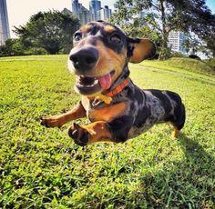 I think I can fly!