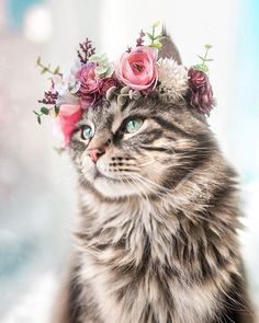leo maine coon loves his flower crowns Cute Baby Cats, Cute Cats And Kittens, Cute Funny Animals, Cute Baby Animals, Kittens Cutest, Animals And Pets, Funny Cats, Kittens Playing, Fun Funny