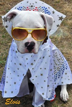 Elvis is in the building! Elvis dog halloween costume. For more pet costume photos, visit our facebook page: https://www.facebook.com/media/set/?set=a.598425373528677.1073741856.127262297311656&type=1