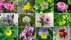 Blomster kan brukes på ulike måter i matlaging. Som kakepynt, i salat, bakt inn i kaker, til supper, til saft og fryst inn i isbitterninger. Blomster brukes mest som pynt, men noen tilfører også ekstra smak som for eksempel blomkarsen som har en skarp peppersmak. Det meste i hagen er egentlig ufarlig, men det finnes …