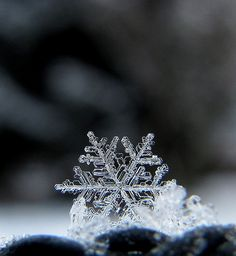 Snowflake -- probably the most delicate of all His creation... <3<3