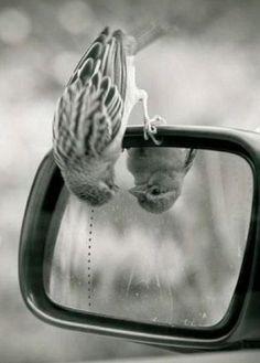 More animal love here>> http://furlesscosmetics.com.au/furless-cosmetics-blog/itemlist/category/8-animals