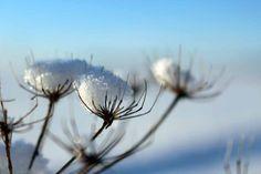 Entdeckungen im Winter   Der Schnee verzaubert die Vegetation aus dem Herbst (c) Frank Koebsch (2)  #Winter #Schnee #Mecklenburg-Vorpommern