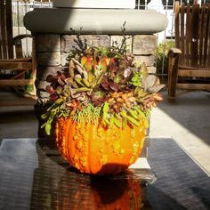 #succulentpumpkin designed by #naturecontainers for #waterwiseyarddesignanddecor #succulents #succulentcontainers #succulentlove #fall