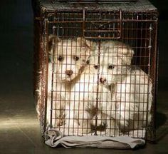 Puppy farms produce sick and scared puppies. Raising awareness and pet adoption will stop this cruel industry.