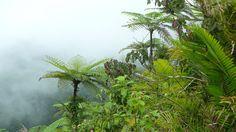 Dovolená na Bali. Vacations, Plants, Vacation, Flora, Plant, Holidays, Planting, Travel