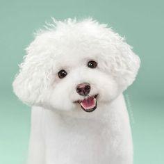 Antes e depois: cachorros cortam cabelo e resultado é imperdível