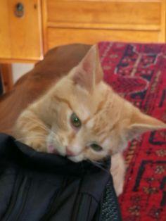 Laptop bag teething
