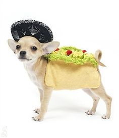 Cute Dog Costumes - Taco Costume for Dogs, $35.99 (http://www.cutedogcostumes.com/taco-costume-for-dogs/)