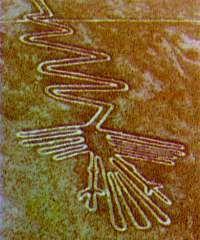 Nazcar Lines - Heron Bird