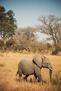 South African safari....my ultimate dream vacation