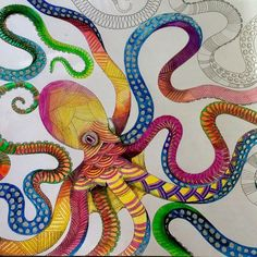 animal kingdom millie marotta octopus - Google Search