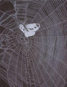 A moth on a web