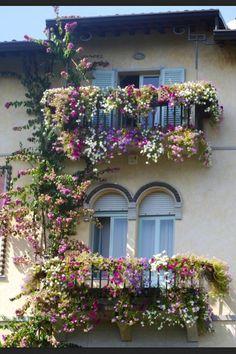 Flowers on balcony!