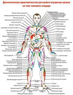 Проекции внутренних органов Health Diet, Health Fitness, Witchcraft For Beginners, Chiropractic Clinic, Fundamentals Of Nursing, Face Exercises, Christian Cards, Alternative Therapies, Human Body