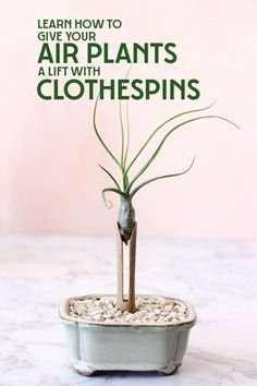 Give your air plants a life with clothespins: A DIY plant stand that makes for a… - Dekoration Ideen Air Plant Display, Diy Plant Stand, Plant Stands, Air Plants Care, Plant Care, Tropical House Plants, Air Plant Terrarium, Terrariums, Moss Terrarium