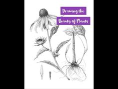 In this short video I give you a sneak peak into to some of the drawing skills you will learn in my online class Drawing the Beauty of Plants. Online Art Classes, Plant Drawing, Drawing Skills, Botanical Art, Botany, Sketchbooks, Art Tutorials, Natural Beauty, My Arts