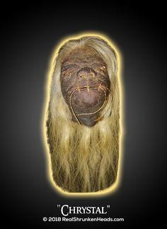 "Real Shrunken Head Photo. Female ""Chrystal"" www.RealShrunkenHeads.com Tsantsa: Oddities & Curiosities"