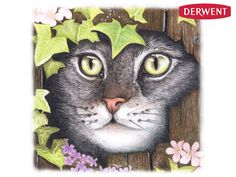 Cat in ivy by Louise Welsh - Created using Derwent Coloursoft Pencils