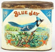 Tin - Blue Jay