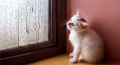 Diagnose and fix your window problems with these tips from a windows expert. Old Windows, House Windows, Window Condensation, Invisible Glass, Window Cleaning Tips, Housekeeping Tips, Going To Rain, Pretty Cats, Pretty Kitty