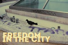 freedom in the city