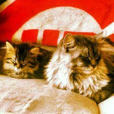 My babies :)