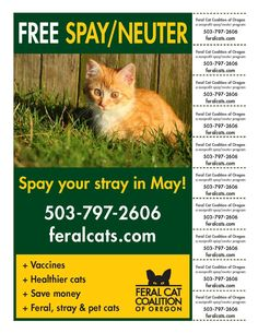 Spay your stray in May! We're offering FREE spay/neuter services for stray and feral cats who visit FCCO's clinic in May. Free services include spay/neuter surgery, vaccines, treatment for fleas, ear mites, pain relief medication and an ear-tip for identification.