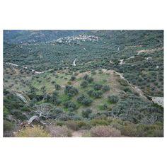 Olive Tree, Homeland, City Photo, Greece, Nature, Inspiration, Instagram, Greece Country, Biblical Inspiration