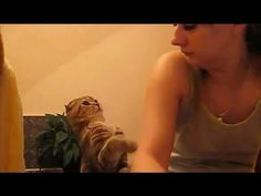 """""""Pet me…MEOW!"""" Watch These Hilarious Kitties Demand Their Owners' Attention"""