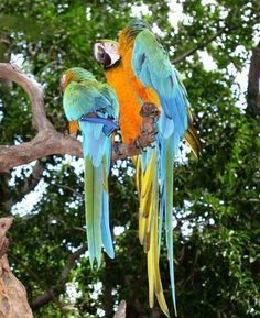 birding in curacao | Home Sweet Home… Home Sweet Home… kleurijke birds…