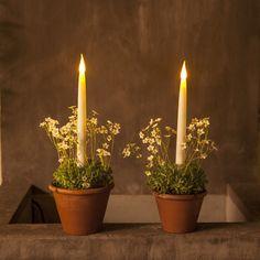 Créez vos centre de table avec nos bougies led et nos chauffe plat led | Bloo Lands